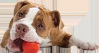 Bolinha para Cães